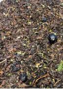 Чай черный Черная смородина со сливками